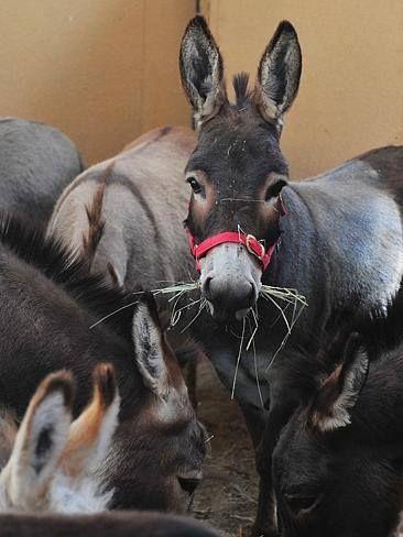 Amelia Rise Donkeys