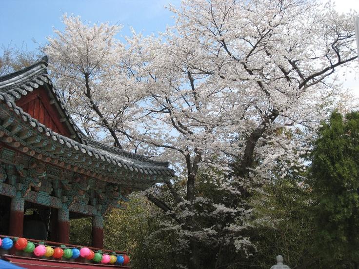 pusan Korea