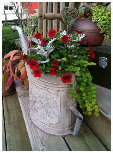 Red petunias, creeping jenny to trail over, and silvery dusty miller