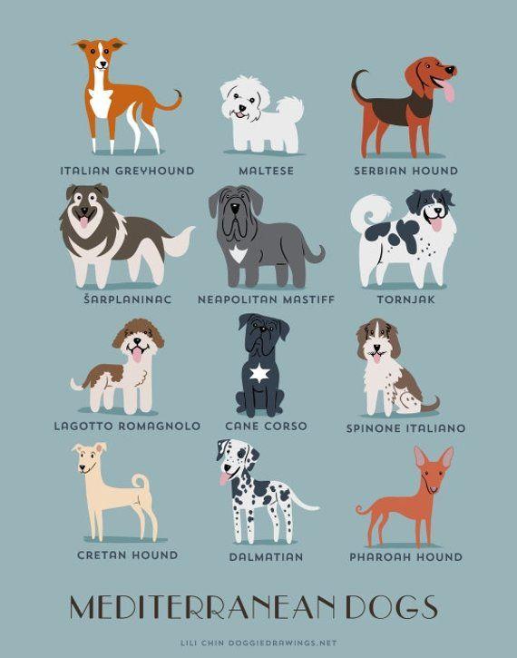 Dog Breeds Print Mediterranean Dogs Art Print Dog Breeds From