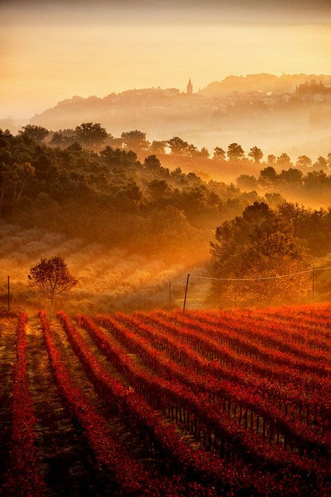 Vineyards, Umbria, Tuscany, Italy  photo via iles
