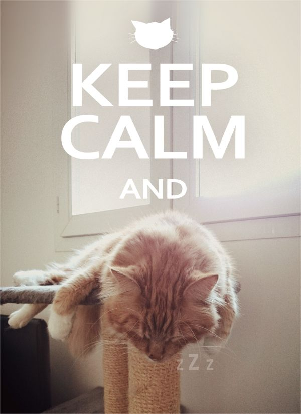 chat keep calm / Keep Calm and cat