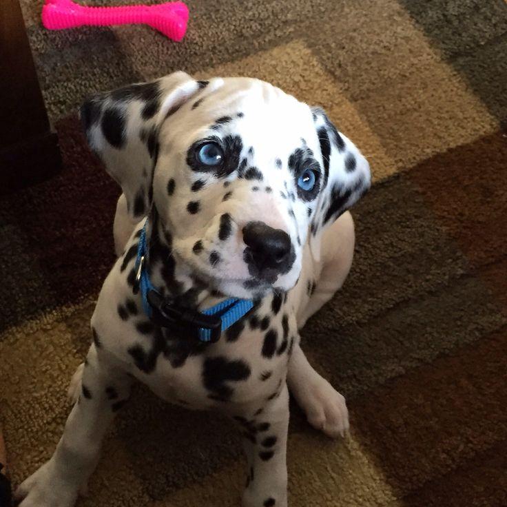 My beautiful Blu eyed girl!!