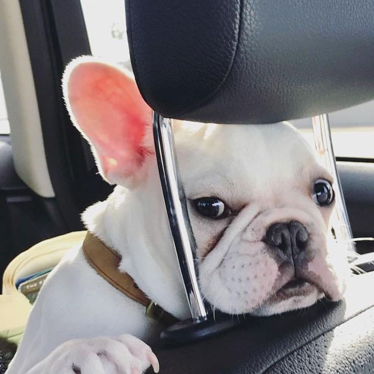 """""""Just helping my Mom with directions to the  dog park!"""""""