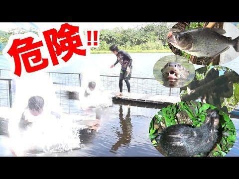You Tube: 【アマゾン大冒険2】急病発症?ピラニアも住むアマゾン川に転落した!!
