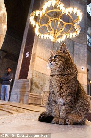 Cats of Instanbul - one strikes a thoughtful pose in Hagia Sophia Basilica