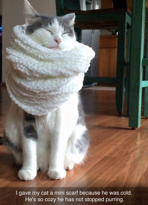 Happy kitty in scarf