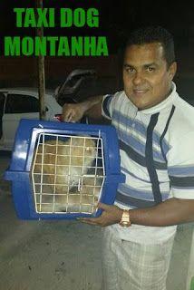 TAXI DOG MONTANHA TRANSPORTE DE ANIMAIS NO RIO DE JANEIRO: De MESQUITA-RJ para GUARULHOS-SP