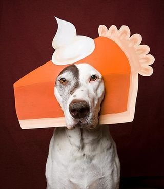 Pumpkin Pie hat - a #Thanksgiving photo prop - so funny!: