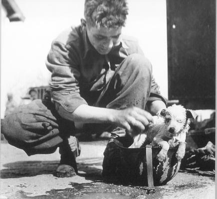 An American soldier gives a bath to a relaxed puppy in Tunisia in March 1943.