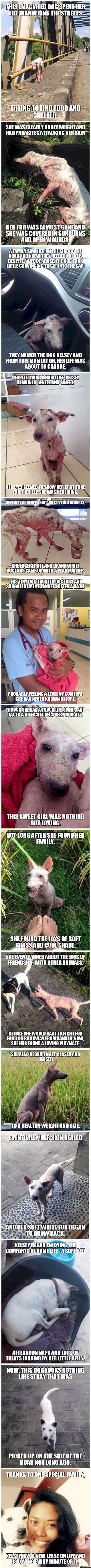 The story of Kelsey the stray and emaciated dog