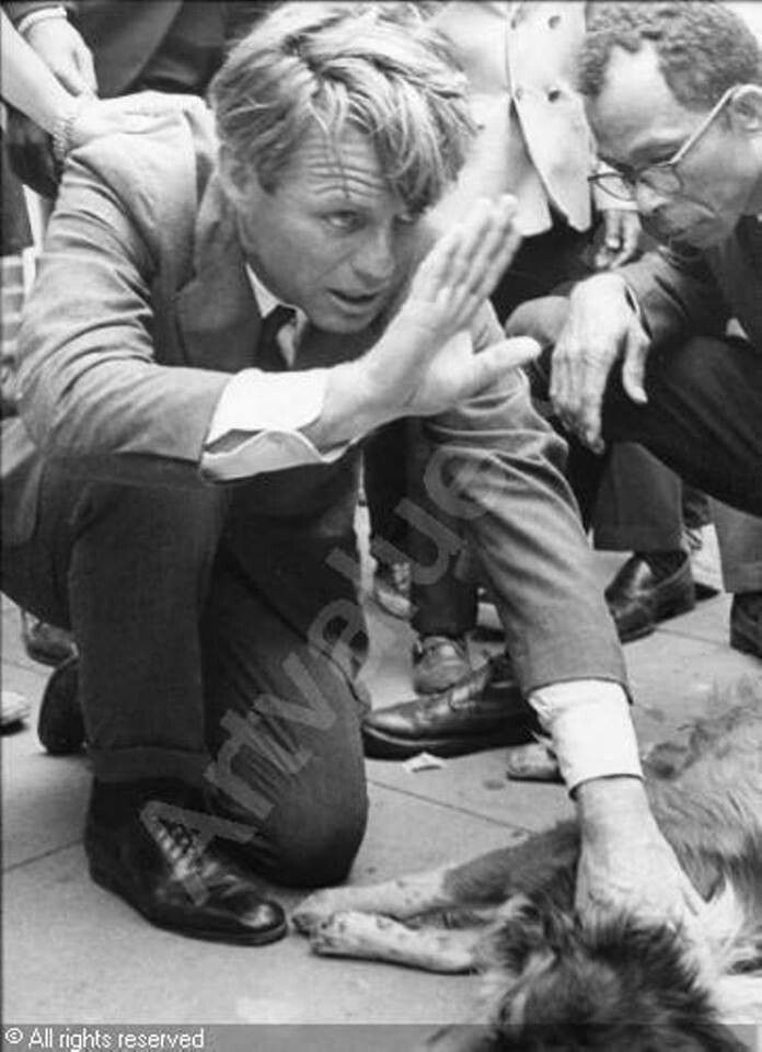 Bobby Kennedy carries dog hit by car until owner is found.