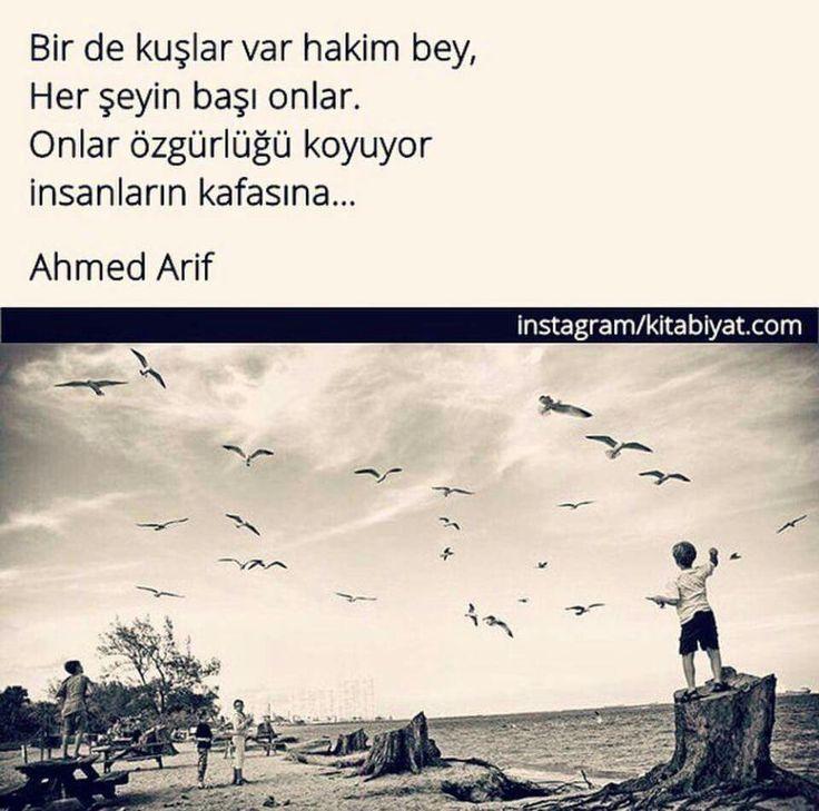 ✔Bir də quşlar var hakim bəy, Hər şeyin başı onlar. Onlar azadlığı qoyur insanların başına ... #Ahmed_Arif