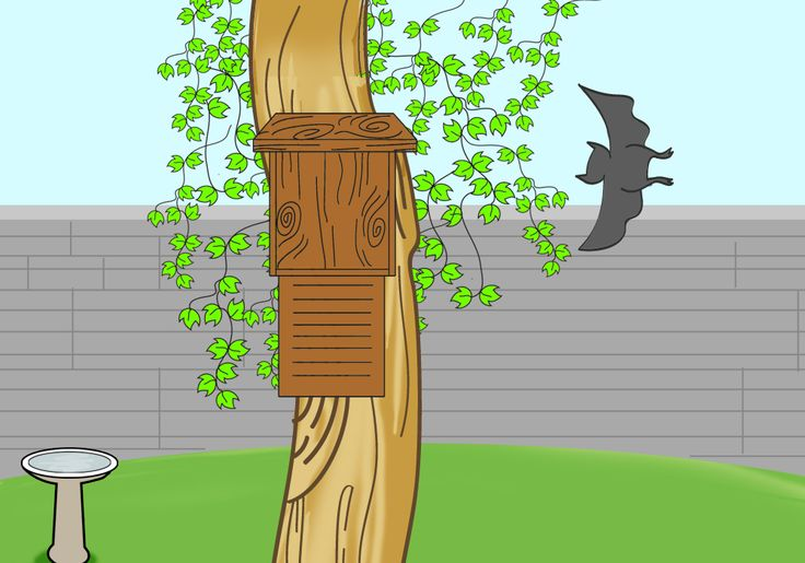 How to Attract Bats to Your Garden in 5 Steps. Why you ask? Bats eat mosquitos. All good in my book. WELCOME BATS