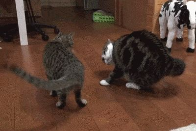 The Do-Si-Do: | 17 Cats Who Can't Stop, Won't Stop Dancing
