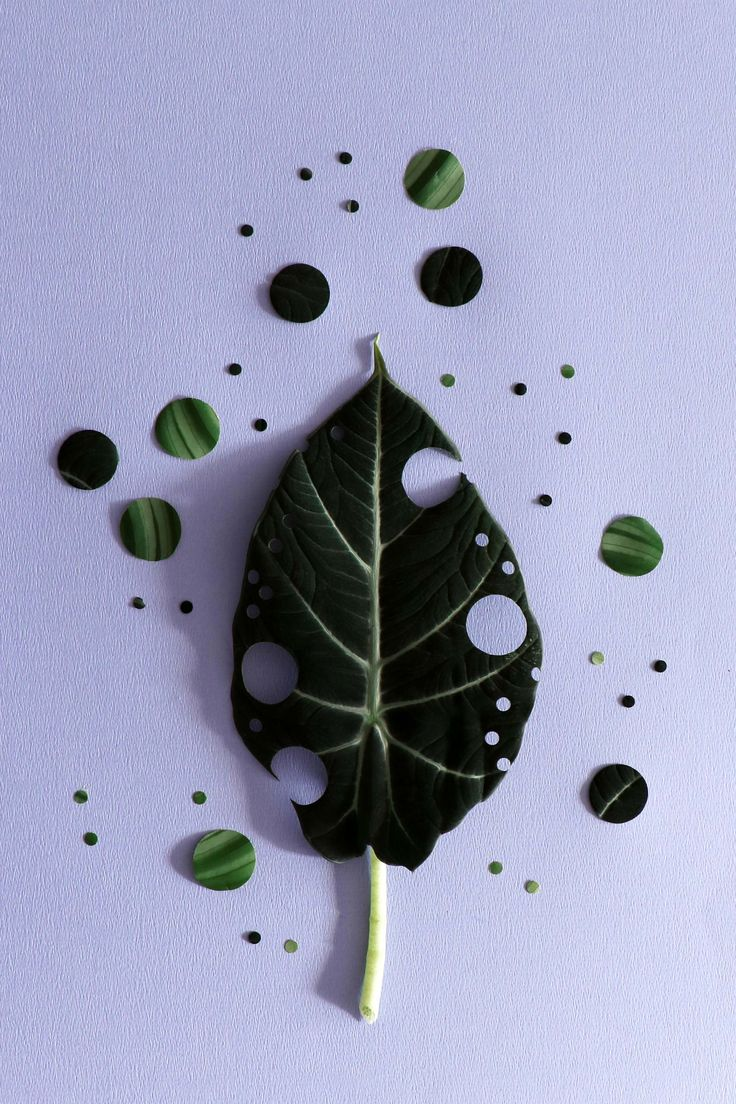 MEIN ATTIC für vtwonen / Pflanzenstillleben Fotografie: Marij Hessel
