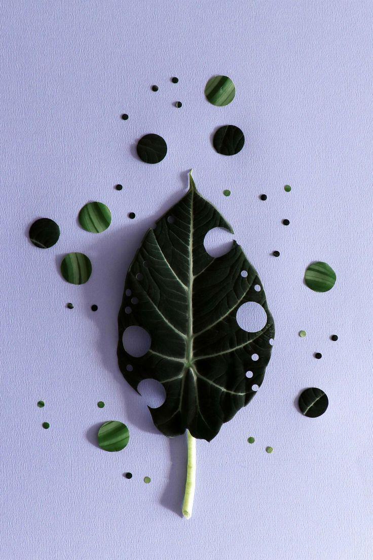 MY ATTIC voor vtwonen / planten stilleven  Fotografie: Marij Hessel