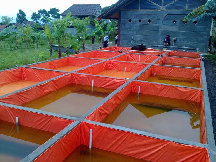 1000 Cara Lengkap Budidaya Ikan Lele di Kolam Terpal - AQUACULTURE INFORMATION