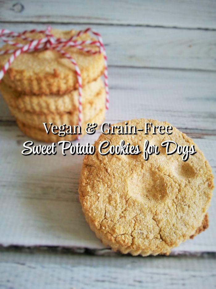 Healthy Homemade Peanut Butter Pumpkin Dog Treats Recipe Dog