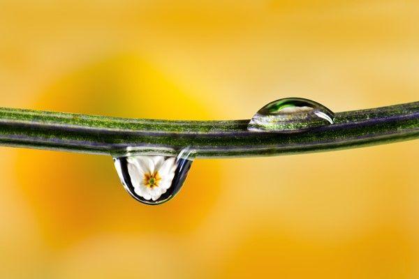 Comment photographier les reflets dans une goutte d'eau https://www.nikonpassion.com/comment-photographier-les-reflets-dans-une-goutte-d-eau/