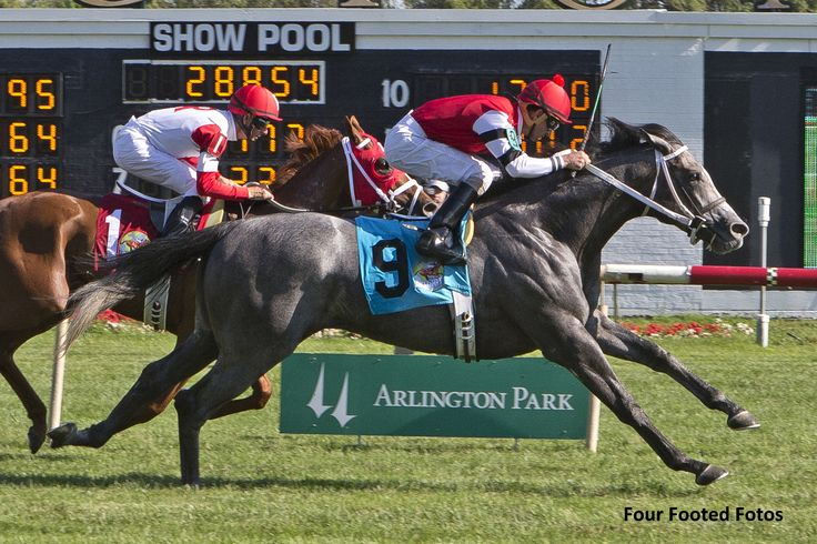 One Mean Man (USA) 2013 Gr.c. (Mizzen Mast (USA)-Abbeyville Miss (USA) by Grand Slam (USA) 1st American Derby (USA-G3,9fT,Arlington) (photo: Four Footed Fotos)