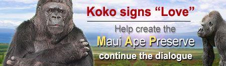 koko the gorilla/sign language  Vol.1 Ch.3