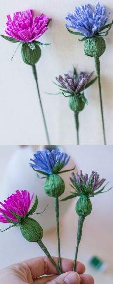 Wildflower Series | The Thistle