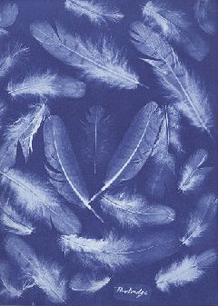 """Anna Atkins made thirteen known versions of her work entitled """"British Algae: Cyanotype Impressions"""" (1843-1853). In October 1843, Atkins began publishing folios of her photogenic (photogram) drawings. In 1850, she began to publish more comprehensive collections of her work, completing a three volume anthology in 1853. These books, containing hundreds of handmade images, were the very first published works to utilize a photographic system for scientific investigation and illustration…"""