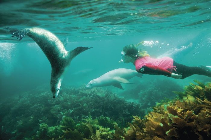 Swimming with sea lions at Seal Cove on our Perth to Adelaide Tour