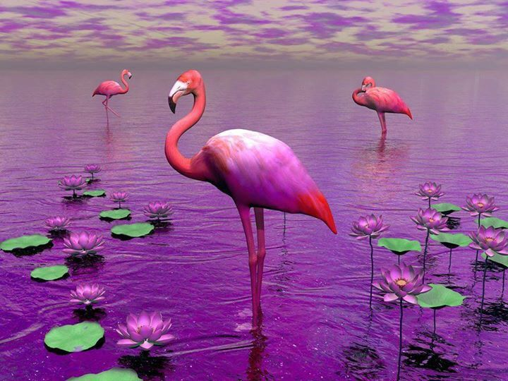 200 best Birds,,,God's winged masterpieces! images on ...