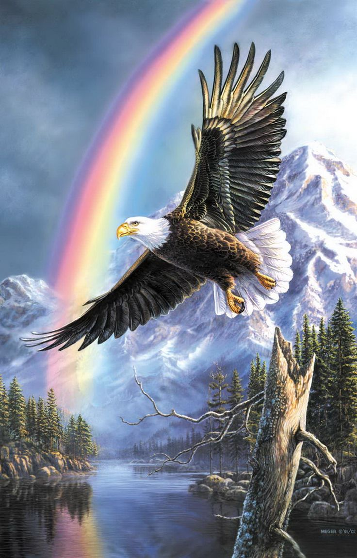 The Promise by James Meger ~ bald eagle in flight ~ rainbow ~ snow-covered mountains