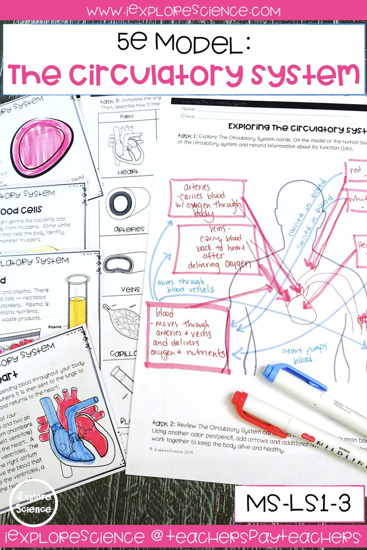 Exploring The Circulatory System Activity Set (MSLS13