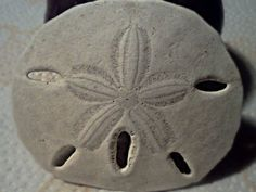 The legend of the sand dollar and its Holy meaning.
