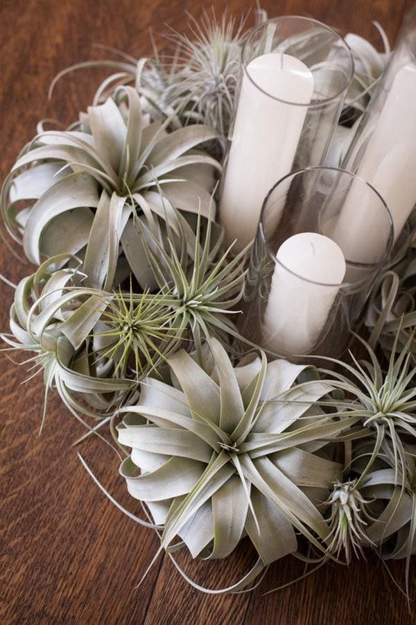 how to display airplants creative home decoration ideas air plan wreath