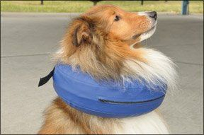 Comfortable Dog Cone Alternatives - Whole Dog Journal Article