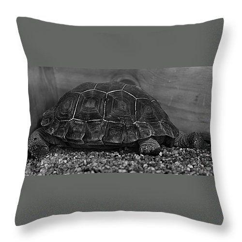 """Galapagos Tortoise baby Throw Pillow 14"""" x 14"""""""