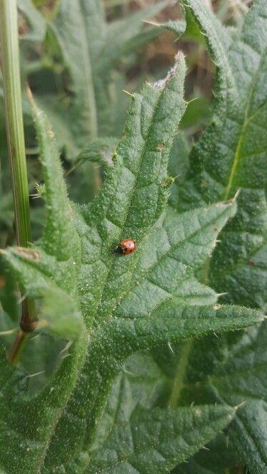 Smooth on sharp, ladybug love