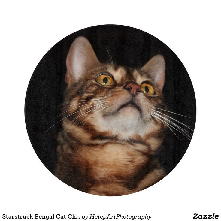Starstruck Bengal Cat Chopping Board Your Own Meme