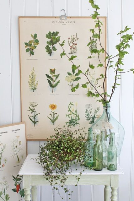 Ancient botanical drawings of medicinal herbs and plants.   Herbology, herbalism, and herbal medicine.