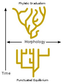 Punctuated Equilibrium: theory in evolutionary biology which proposes that most species will exhibit little net evolutionary change for most of their geological history, remaining in an extended state called stasis; when significant evolutionary change occurs, it is generally restricted to rare and rapid events of branching speciation called cladogenesis (process by which a species splits into 2 distinct species, rather than 1 species gradually transforming into another)