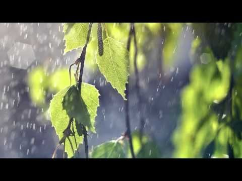 ▶ Best Ever Chinese Bamboo Flute Zen Relaxing Music Playlist- Over 1400 Likes - Meditation Spa Yoga - YouTube