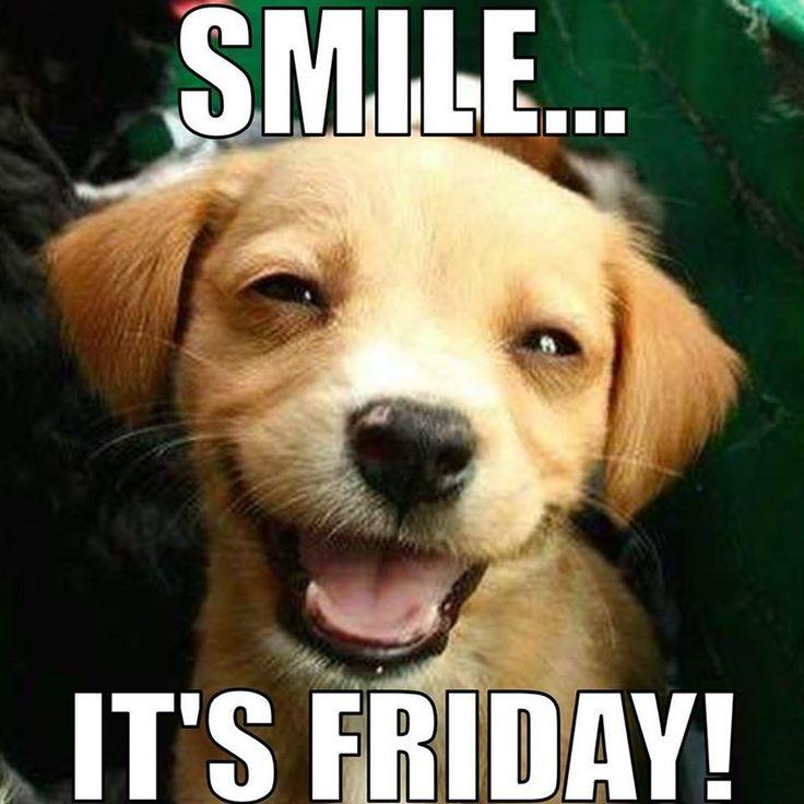 Funny Friday Dog Meme : Best friday greetings images on pinterest happy