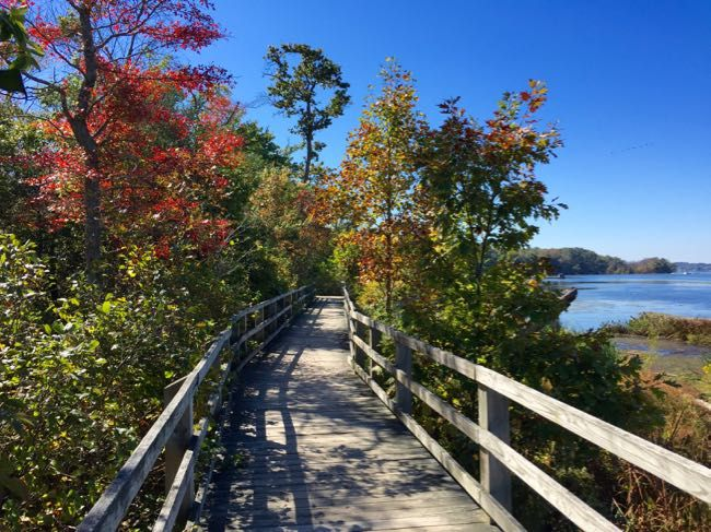 Mason Neck State Park is a fantastic fall destination in Fairfax County, Virginia. Perfect for a hike, picnic, birding, and boating. Try the Bay View Trail for beautiful fall colors from the boardwalk.