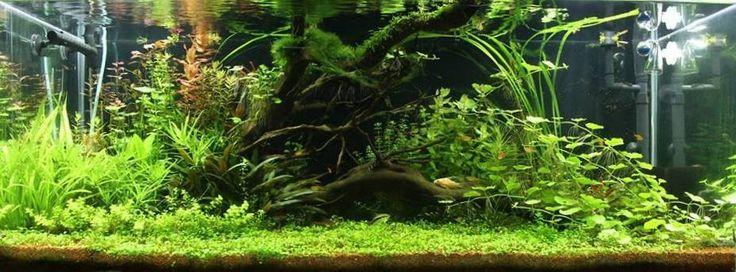 River Garden by Krzysztof Majchrzak Aquascape Awards Aqua