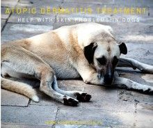Turmeric for Dogs - Atopic Dermatitis treatment