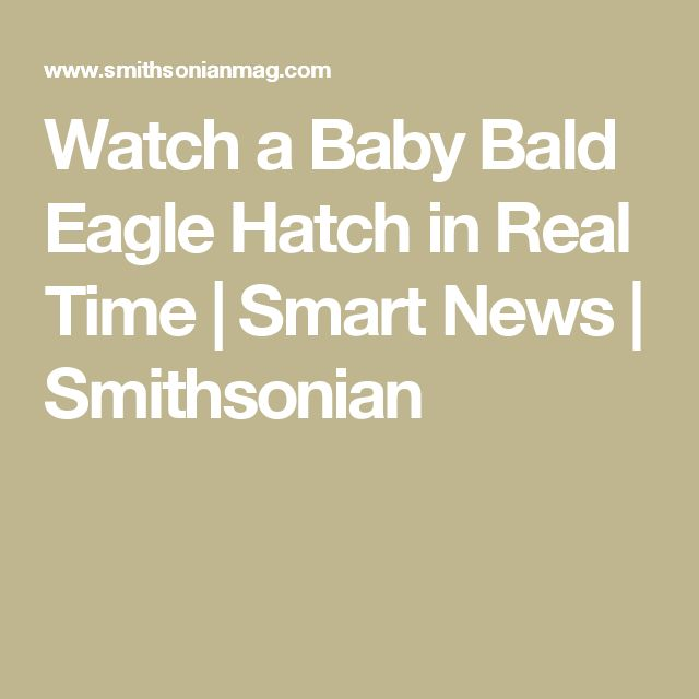 Watch a Baby Bald Eagle Hatch in Real Time      |     Smart News | Smithsonian
