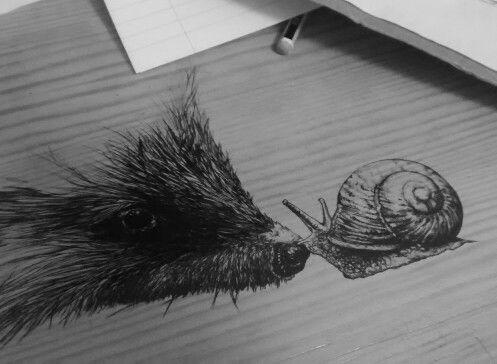 Hedgehog and snail, wildlife art, biro, acetate, drawn by Karolina Czerwinska
