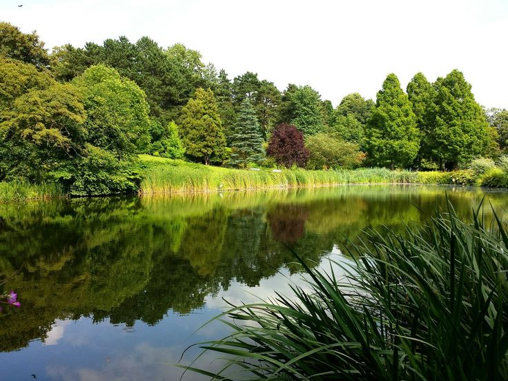 reflection, water, nature, tree, lake, growth, green color, no people, outdoors, sky, day, beauty in nature
