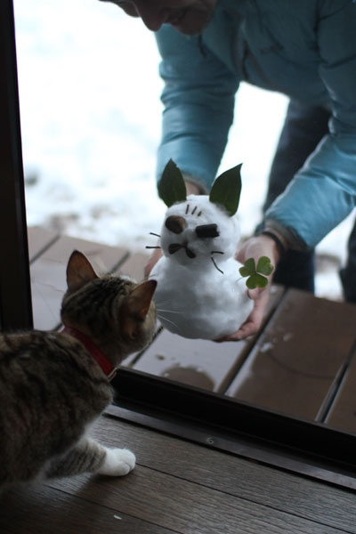 snowcat of naro!