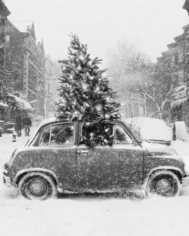 Christmas in Black and White